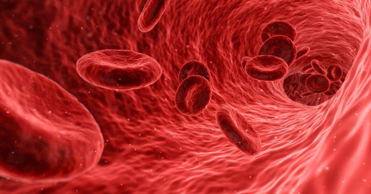 Blutplättchen Mikrozirkulation