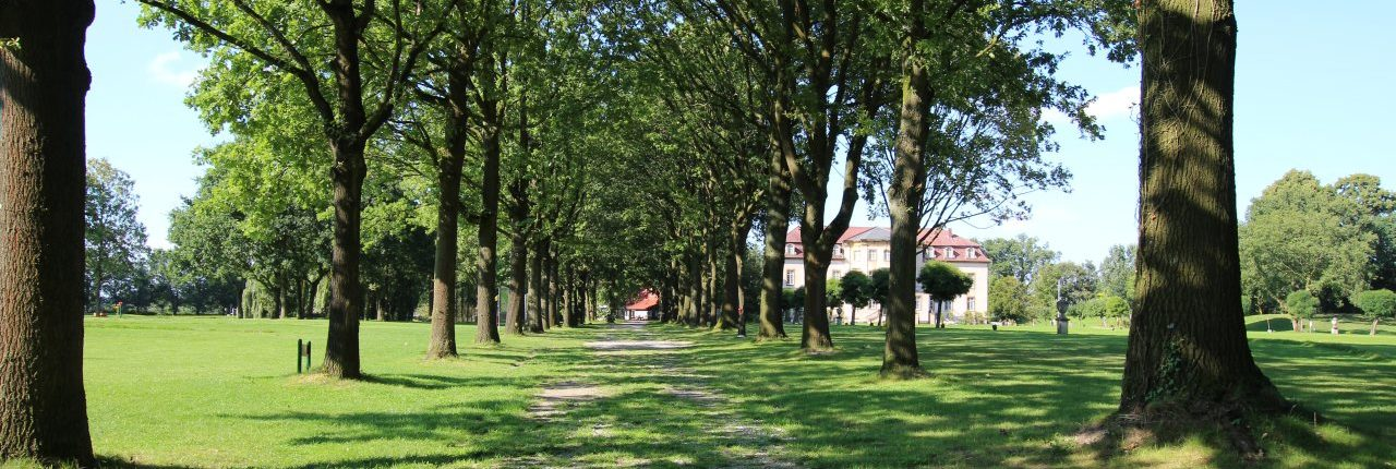 Allee mit Bäumen am Schloss Möhler